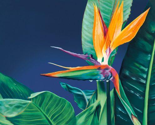 Bird of Paradise Botanicals