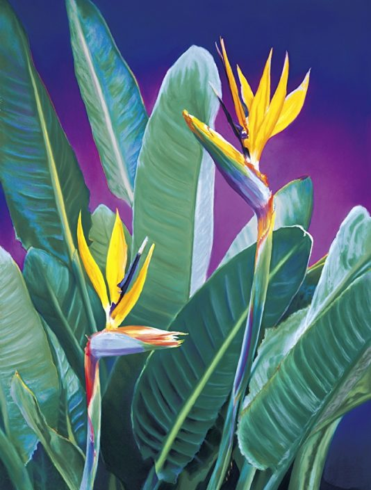 Birds Of Paradise, Pastel Painting, two Birds of Paradise featured, purple background hues, brilliant yellow and orange blooms, green, lush leaves