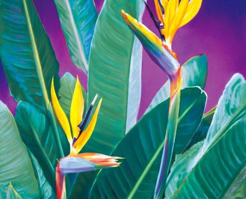 Birds of Paradise Botanicals