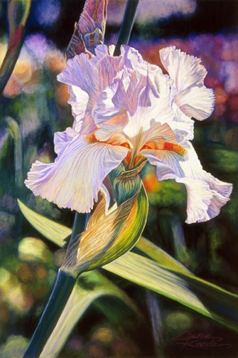 Heavenly Vision, Iris, Botanicals, Palette colors: orchid, pink, white, green