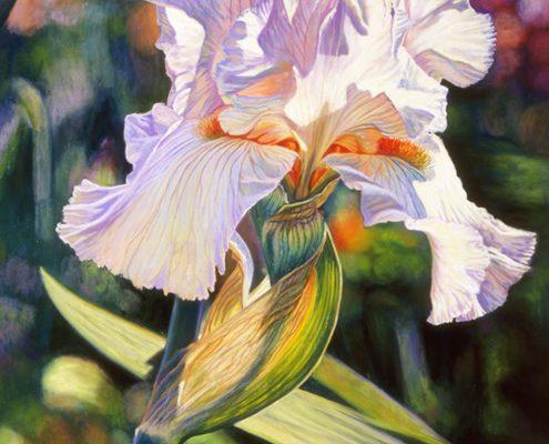 Heavenly Vision Botanicals