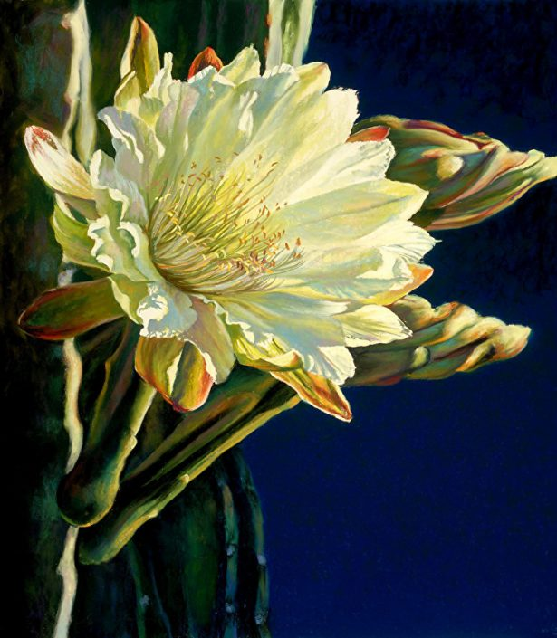 Moonlight Cereus I, Botanicals, Night Blooming Cereus Bloom, translucent white, dark blue background, pastel painting