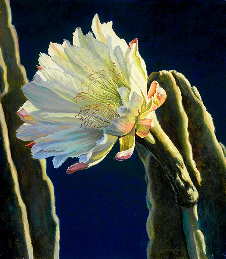 Moonlight Cereus II, Botanicals, Night Bloomig Cereus, Translucent white bloom, dark blue background