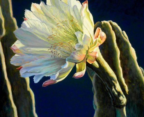 Moonlight Cereus II Botanicals Prints