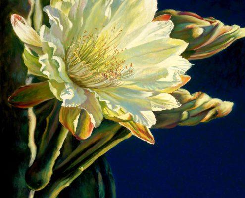Moonlight Cereus I Botanicals Prints