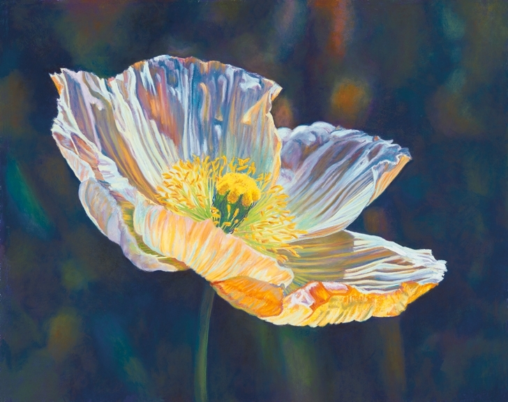 Opalescent Poppy, Icelandic Poppy, brilliant translucency and transparency, orange, purple and blue palette, pastel painting