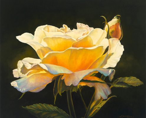 Budding Golden Elegance Botanicals, yellow rose of Texas